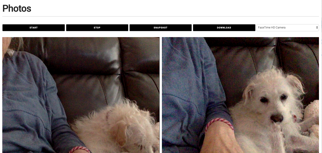 Picture of my dog Flix taken with HTML Web-RTC
